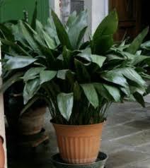 13 best houseplants safe for cats images on pinterest indoor