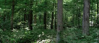 Indiana forest images Registry of biggest trees in indiana now available online jpg