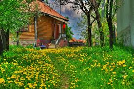77bb44 color wallpapers cute little cottage small house grassy