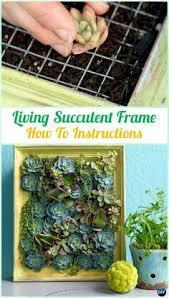 diy indoor outdoor succulent garden ideas instructions gardens