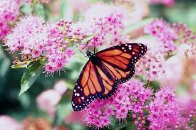 conserving monarch butterflies and their habitats usda