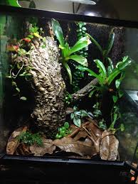 dart frogs and electric blue day gecko chameleon forums