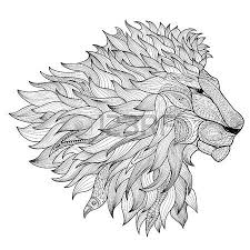 lion drawing images u0026 stock pictures royalty free lion drawing