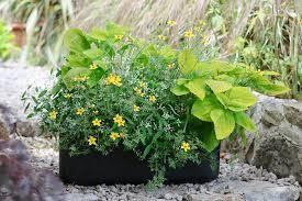Outdoor Potted Plants Full Sun by Container Plants For Full Sun Gardenersworld Com