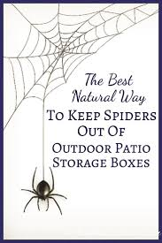 best 25 peppermint oil for spiders ideas on pinterest