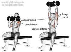 Dumbbell Bench Press Form Svend Press A Compound Push Exercise Main Muscles Worked Lower