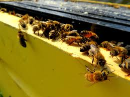 beekeeping adventures a day in the life of busy bees and their