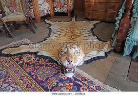 animal skin rug stock photos u0026 animal skin rug stock images alamy