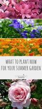 gardening tips 13919 best winter growing tips images on pinterest gardening