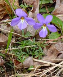 Identify Flowers - eastern tennessee wildflowers list by season and color to