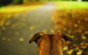 cute autumn backgrounds dog head autumn wallpaper 1920x1200 12792