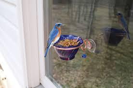 essentials copper bluebird mealworm window feeder
