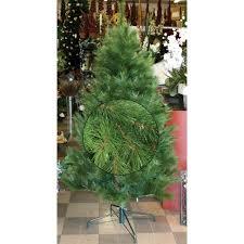 tree nz pine 6ft