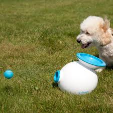 outdoor toys for dogs outdoor designs