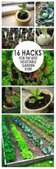 the 25 best vegetable garden tips ideas on pinterest starting a