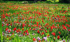 beautiful spring 3 of the best spots in cyprus to see beautiful spring flowers my