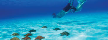 cozumel vacation packages apple vacations vacations for