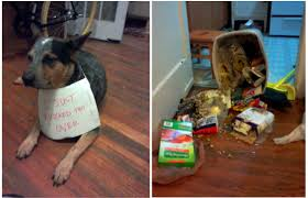 funny thanksgiving dog pictures thanksgiving the official houston spca humane education blog