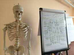Advanced Anatomy And Physiology Anatomy And Physiology I Phoenix Rising Yoga Therapy