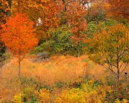 Botanical Garden In Bronx by 2013 Fall Foliage At The Native Plant Garden New York Bot U2026 Flickr