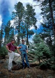tree harvest cuts into wildfire threat article nmsu