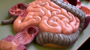 anatomy and physiology 2 anatomy model walk through for digestive