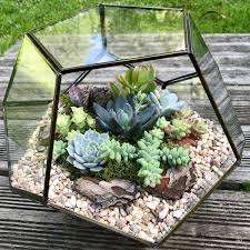 custom made geometric glass succulent terrarium collection only