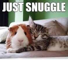 Snuggle Meme - just snuggle meme on me me