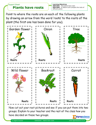 plants and animals in the local environment scheme by missmm