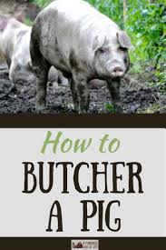 25 best pigs on the homestead images on pinterest backyard