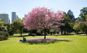 Brisbane Botanic Gardens Mount Coot Tha by The Ten Best Picnic Spots In Brisbane Concrete Playground