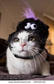 Funny Halloween Costumes Cats Cat Halloween Costume Stock Images Royalty Free Images U0026 Vectors