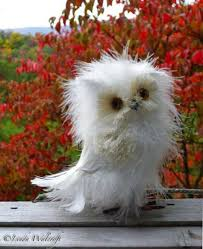 White Owl Meme - and now you know disheveled owls exist and they re awesome owl