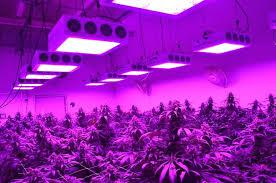 1000 watt led grow lights for sale 1000 watt led grow light led grow lights 1000 watt led grow light