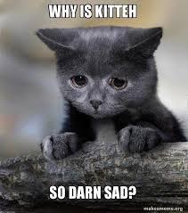 Whyyy Meme - why is kitteh so darn sad whyyy make a meme