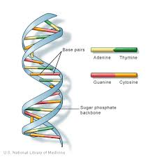 what is dna genetics home reference