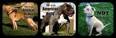 american pitbull terrier c why do we call every bull breed a