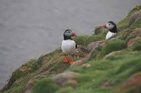 fair isle faroes and spitsbergen united kingdom tours