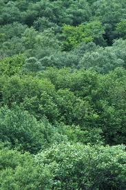 native woodland plants plants u0026 flowers caithness biodiversity group the variety of life