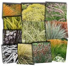 growing ornamental grasses gardening made easy