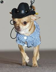Dog Halloween Costumes 25 Dressed Dogs Ideas Heart Cute