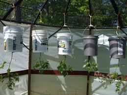 efficient gardening how to grow vegetables upside down