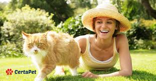 Comfort Pet Certification How To Register Your Cat As An Emotional Support Animal Certapet