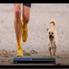 australian shepherd ultra marathon after stray dog joins runner on grueling 155 mile race he fights