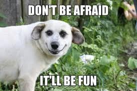 Afraid Meme - don t be afraid it ll be fun melolz just for fun funny memes