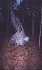 mysteries fairies gnomes elves and gargoyles