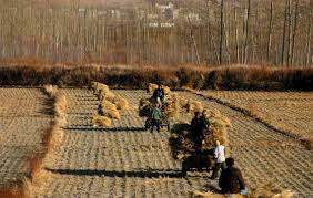 society china shadow file china harvest jpg wikimedia commons