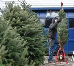 loving life customers cornville christmas tree farmer enjoys