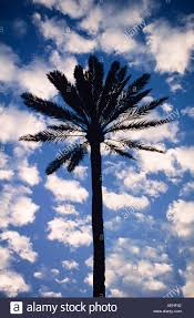 palm tree blue sky white fluffy clouds stock photo royalty free