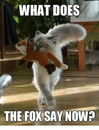 Meme Fox - what does the fox say nowp doe meme on me me